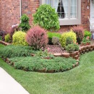 landscaping trees and shrubs image